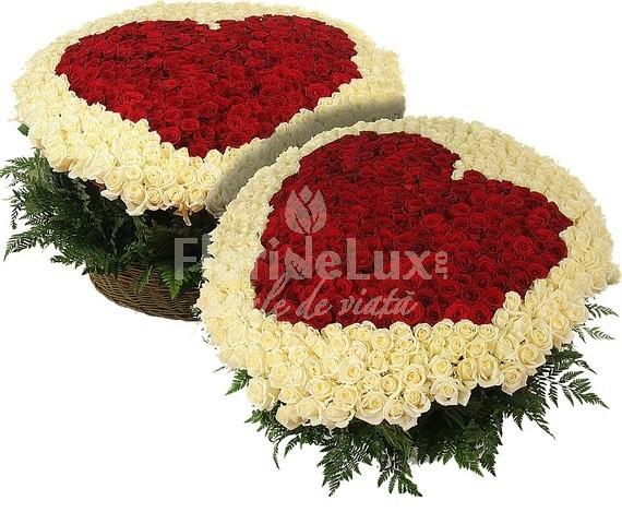 1001_trandafiri_2_